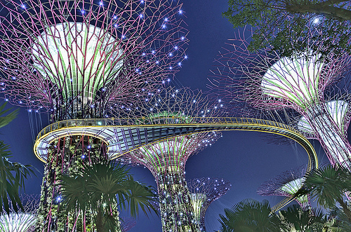 Cluster Of Supertrees With OCBC Skyway @ Gardens By The Bay Singapore